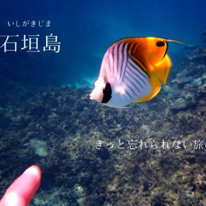 小学生で習う漢字 小学6年生までの漢字の漢字 書き順を覚えるならチャレンジタッチがオススメ チャレンジタッチ 口コミ