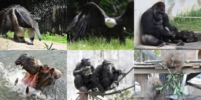 名古屋観光 東山動物園 イケメンゴリラ