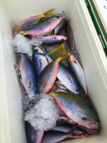 国内旅行 おすすめ 沖縄 石垣島 釣り ぐるくん
