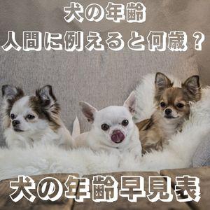 犬の年齢人間に例えると 犬の年齢 人間 計算方法 犬の年齢 人間で言うと 犬の年齢 人間の何倍 犬の年齢 人間と比較 犬の年齢早見表 小型犬 犬の年齢早見表 中型犬 犬の年齢早見表 柴犬 犬の年齢早見表 チワワ 犬の年齢早見表ポメラニアン 犬の年齢早見表シーズー 犬の年齢早見表 ラブラドール 犬の年齢早見表マルチーズ 犬の年齢早見表 ダックス 犬の年齢 チワワ 犬の年齢の数え方 犬の年齢計算 柴犬 犬の年齢計算 チワワ 犬の年齢計算 トイプードル 犬の年齢 トイプードル 犬の年齢 柴犬 犬の年齢 ラブラドール 犬の年齢人間に例えると 犬の年齢 人間 犬の年齢早見表 犬の年齢 チワワ 犬の年齢 トイプードル 犬の年齢 柴犬 犬の年齢 人間 計算方法 犬の年齢 ラブラドール 犬の年齢 小型犬 犬の年齢 14歳